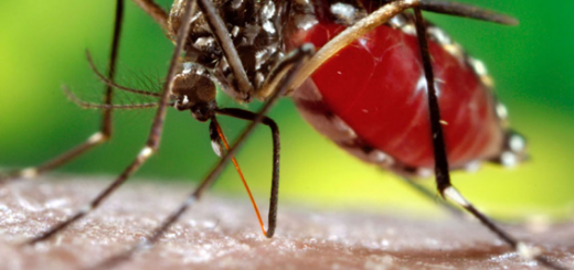 How to Cure Dengue Fever at Home by Natural & Ayurvedic Remedies