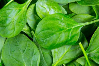 Spinach to Maintain Hemoglobin Level In Blood