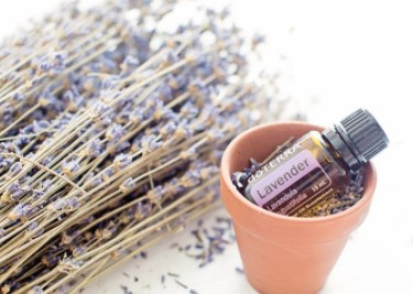 Use Lavender Oil Remedies to Stop Bed Bugs